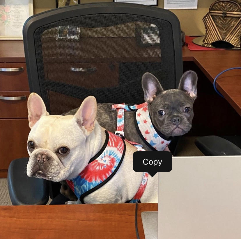 Dogs - Charlie & Daisy